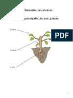 Conocemos las Plantas.pdf