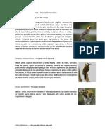 Woodpeckers General Information