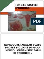 Organ-Organ Sistema Reproduksi