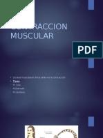 Contraccion Muscular
