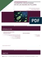 Bacterias Halotolerantes Con Acitividad Lipolítica