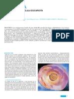 El Origen de La Celula Eucariota