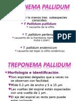 TREPONEMA PALLIDUM