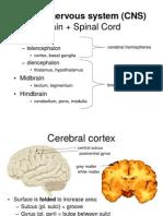 Basic Neuroanatomy