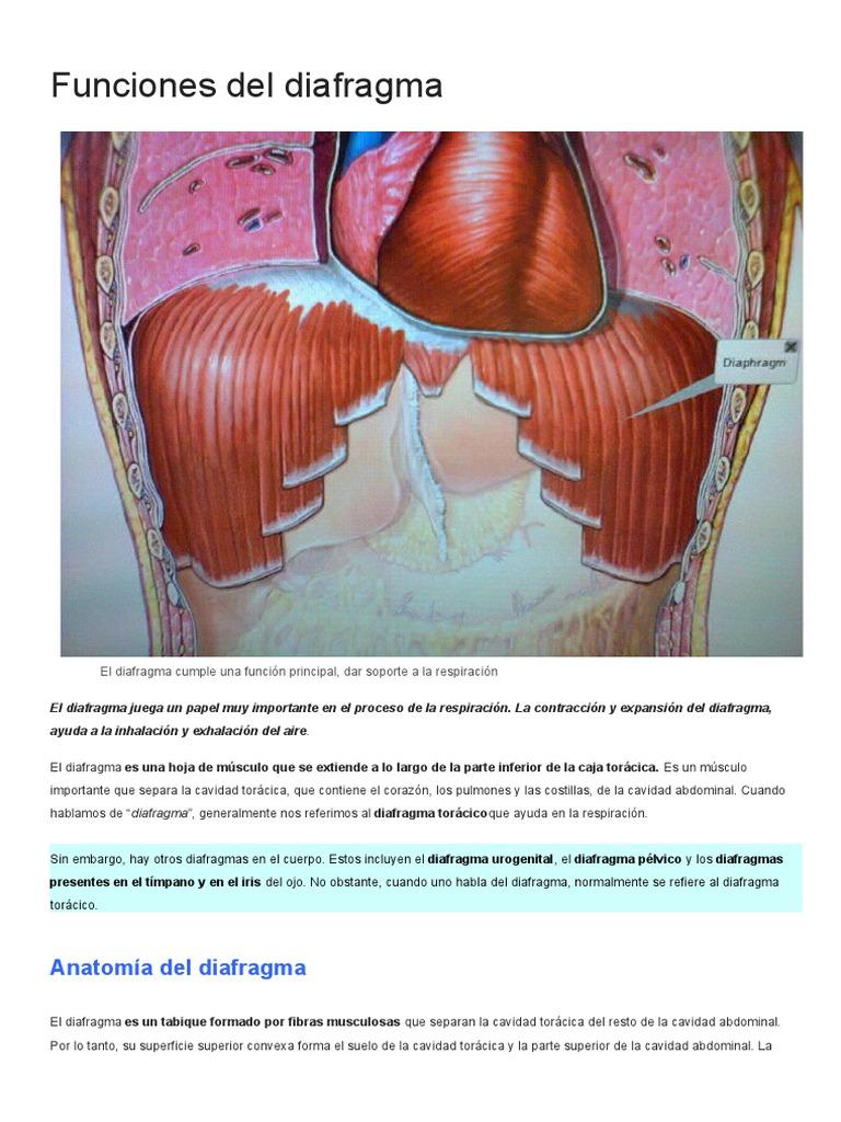 Funciones del diafragma.docx