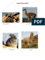 Fauna Zonas de Chile