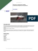 Informe-experimento Cientifico Efecto Del Humo Del Cigarro Pulmones