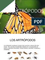 Artropodo Expo Completa