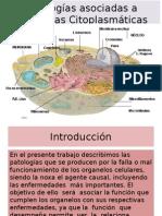 Patologias Asociadas a Los Organelos Grupo 1 Anatomia
