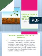Estructura y Desarrollo de La Semilla