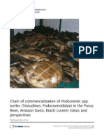 Cadena de comercialización de Podocnemis sp.