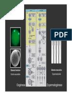Fertiliza__o e Pr_ - Implanta__o Em Medicina