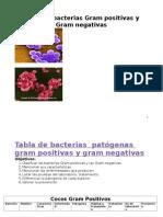 Tabla de Bacterias Gram Positivas y Negativas