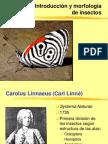 1 Introduccion, Morfología y Exosesqueleto