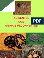 Animais Peçonhentos - 1º
