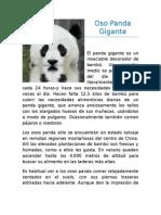 Oso Panda Gigante_sesión2.docx