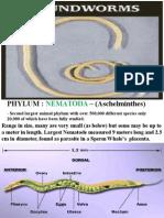 Phylum Nematoda.ppt