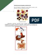 eritrocit 1