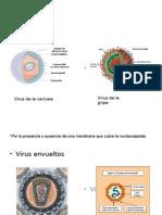 Clasificacion de Los Virus