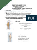 divisiones del cuerpo