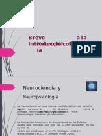 Cerebro Exposicion 0
