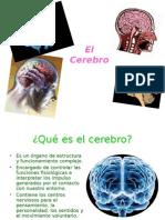 Cerebro Exposicion 1