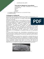 CLASE 12 Clasificación de Los Desgarros Musculares (1)