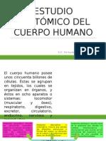 Estudio Anatómico Del Cuerpo Humano