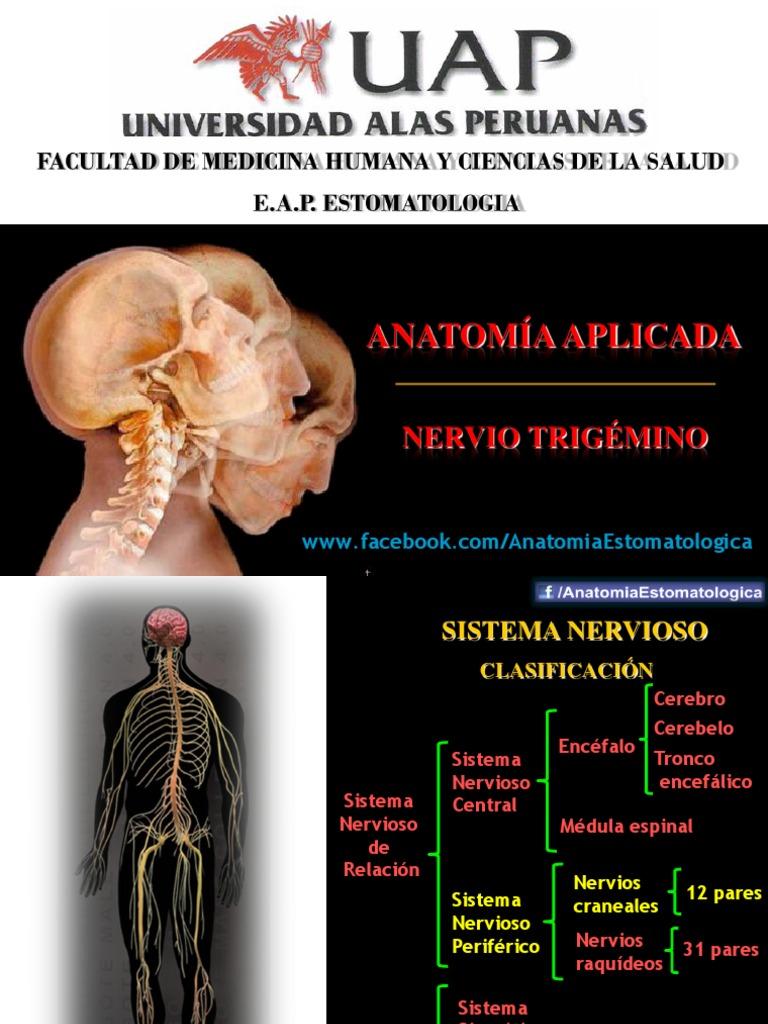Dorable Anatomía Aplicada Del Nervio Facial Fotos - Anatomía de Las ...
