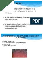 Bacteriologia Pseudomona Auroginosa (2)