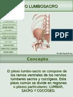 plexolumbosacro