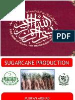 Sugarcane Presentation by Irfan Arshad