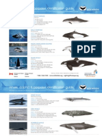 Whale, dolphin & porpoise identification guide