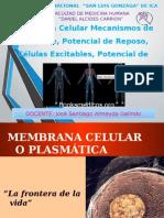 celula fisiologiaa