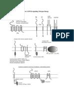 03-04 MS Neuronal Receptors