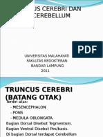 Truncus cerebri & Cerebellum.ppt