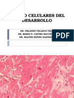 Lab. Patologia - Cambios Celulares Del Desarrollo
