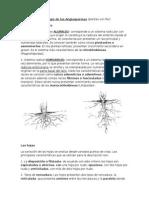 Morfología de Las Angiospermas