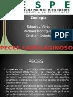 Expo Zoologia 2