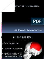 Hueso Parietal y Hueso Cigómatico