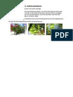 Algenerfahrungen.pdf