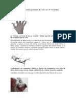 Guia de Estudio Practica 2 Anatomia.