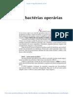 49 as Bacterias Operarias