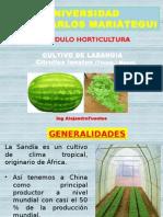 Cultivo de La Sandia