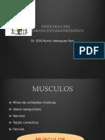 Fisiologia Dental
