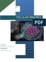 monografiacelulasmadres-121002112515-phpapp01
