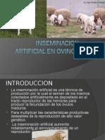 Inciminacion Artificial en Ovinos111