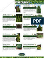 Evergreens Catalog