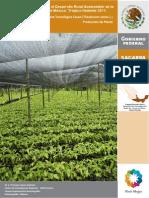 Cacao Produccion