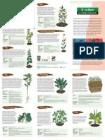 triptico plants